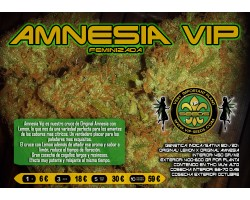 AMNESIA VIP