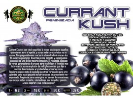 CURRANT KUSH